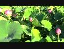 【ニコニコ動画】蓮の花②を解析してみた