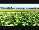 【ニコニコ動画】蓮の花③を解析してみた