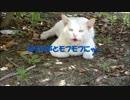【ニコニコ動画】セミと声とモフモフにゃ~を解析してみた