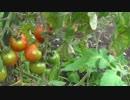 【ニコニコ動画】まったり農家な一日 第23話を解析してみた