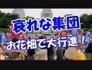 【哀れな集団】 お花畑で大行進!