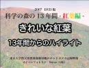 きれいな紅葉 ハイライト(2007 DVD版・科学の森の13年間 -紅葉編- より)