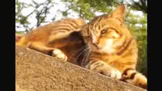 ハシケン 外配信で出会ったネコたち 19