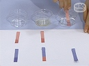 科学実験!リトマス試験紙の色の変化を観察してみよう!【科学でワオ!365】