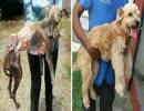 第12位:保護された虐待犬、ホームレス犬たちのビフォーアフター。