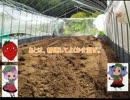 「ニコニコイチゴ講座」 主、イチゴ農家になる 第4回.mp4