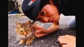 ハシケン 外配信で出会ったネコたち 20