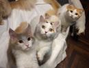 かわいい子猫と触れ合える!超おしゃれな猫カフェ「MoCHA」