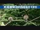 野鳥観察2015年9月12日