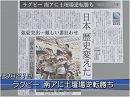【ラグビー】日本代表が南アフリカ代表を撃破[桜H27/9/21]