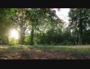 【前編】ソロキャンプへの誘ない Vol.3 妖精の森キャンプ場