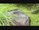 【癒し系BGM】 雨音と雫 日本庭園⑤ 【自然音】