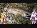第86位:【VOICEROID実況】釣然なるままに、ゆかマキ~2015秋~【魚釣り】 thumbnail