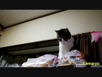 イタズラがバレた猫の演技力の無さ