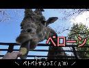 PCX150で宇都宮&日光に行ったよっ!ネコ科が超絶可愛いっ!!
