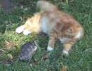 カメ 対 ネコ