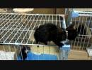 【癒し】 「慎重に!慎重に!」 子猫の成長日記