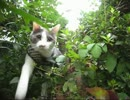 【猫が】 コブクロ 「未来」 映画 「orange -オレンジ-」【散歩してみた】