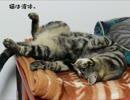 【クロエ】液体猫