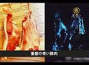 【新唐人】【中国1分間】重慶の青い豚肉