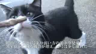 【猫投票1位記念】誰だよお前'2016