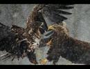フリーBGM「鳥上決戦~焼き鳥になるのはお前だ(ループ仕様)」
