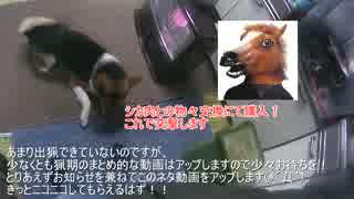 馬仮面VSワンタ 異種格闘技戦  猟師狩猟ライフ2-17(ネタ番外)