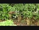 リス(ラ・セルバ自然保護区 コスタリカ)