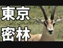 東京で弱肉強食トーキョージャングル実況プレイ【8】 thumbnail
