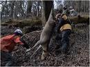 【葛城奈海・海幸山幸の詩 #8】鹿を狩る~命をいただき、山を守る[桜H28/3/2]