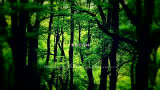 Conslo - 考察の森林