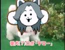 【アンテMAD】MTT直販 愛犬(?)ロボ「テミー」【雑コラ】