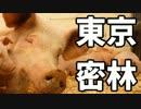東京で弱肉強食トーキョージャングル実況プレイ【11】 thumbnail