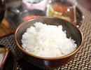 「日本一美味しい米」を作る匠の米を炊く