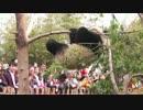 2016年3月26日中継のハイライト 晶運(ジンユン)は「顎のせ」の木にぶら下がって落ちてしまった。 thumbnail