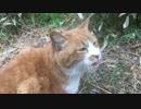 公園のビューティー猫、猫風邪を患う