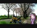 桜リベンジ!海軍道路【結月ゆかり車載】 thumbnail