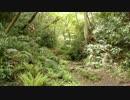 逗子にジャングルがあったw 湘南妙義(鷹取山)登山道 神武寺コース