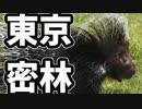 東京で弱肉強食トーキョージャングル実況プレイ【20】 thumbnail