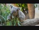 【2015初夏】東山動植物園【動画版】