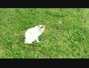 ◆出会って3秒でメロメロの野良猫3