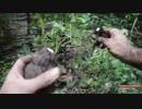 ホモと学ぶスイートポテト畑
