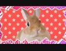 【初音ミク】ウサギノキモチ【アニマルMV】