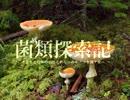 【キノコ狩り_20160416】 菌類探索記 「朽木に咲く女王蟻の花」