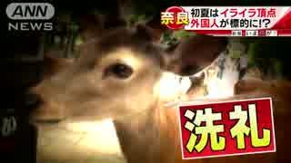 凶暴でも「シカ」らないで・・・正しい鹿との付き合い方