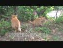 第78位:甘ったれ猫、故郷を訪問する thumbnail