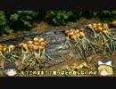 【家庭菜園】ゆっくり霊夢とゆっくり魔理沙の家庭菜園12回目【二年目】