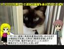 【RO】ミラクル精錬バグ 訴訟編その1【マロントさん】