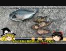 しめじの釣り日記「東扇島西公園でヘチ釣りリベンジ編」