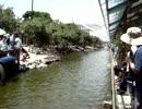 神戸どうぶつ王国 ピンクペリカンのフライト動画